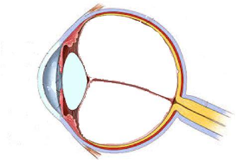 imagenes de ojos humanos y sus partes tipos de ojos