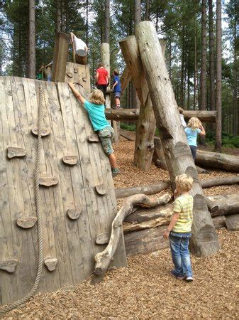 tree top trail picture of moors valley country park and