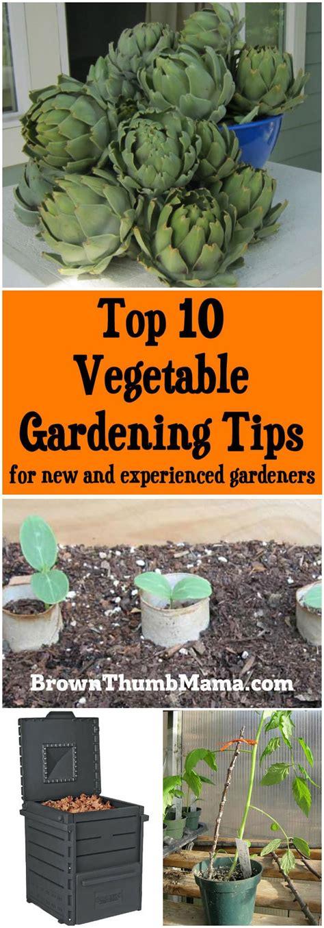 top  vegetable gardening tips   experienced