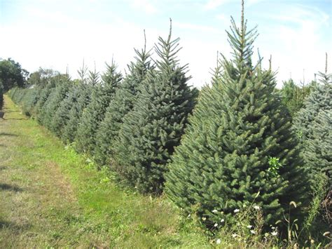 boone county farm honored as best christmas tree farm in