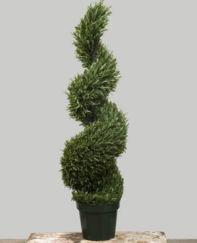 topiary styles rosemary spiral topiary tree allissias attic