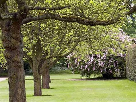 alberi da giardino sempreverdi a crescita rapida alberi a crescita rapida alberi scopriamo gli alberi a