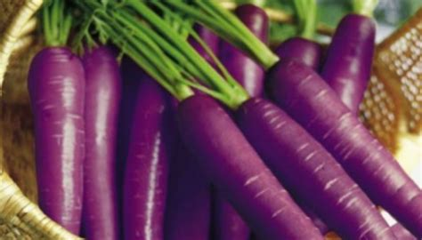 the carrot purple and other curious stories of the food we eat rowman littlefield studies in food and gastronomy books benefits of purple carrots beautyvigour