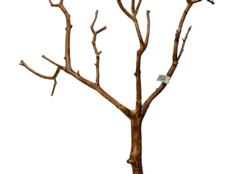 decorative driftwood branches buy online driftwood bamboo manzanita and more for your