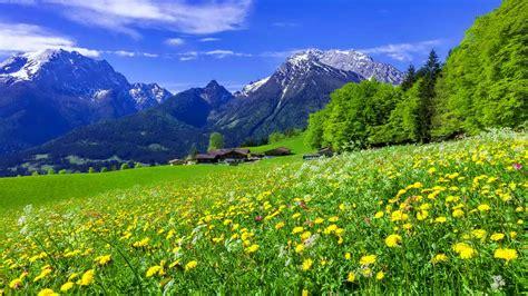 mountain meadow landscape  beautiful mountain flowers