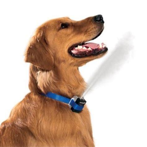 citronella collar 25 best ideas about anti bark collar on small bark collar bark