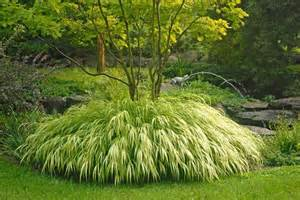 golden japanese forest grass traditional plants