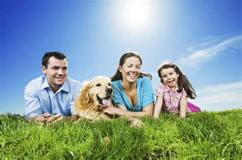 dogs health healthy pets can lead to healthy healthcomu