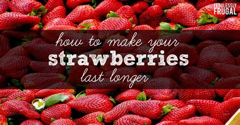 Strawberry Five Lasting Baterai how to make your strawberries last longer