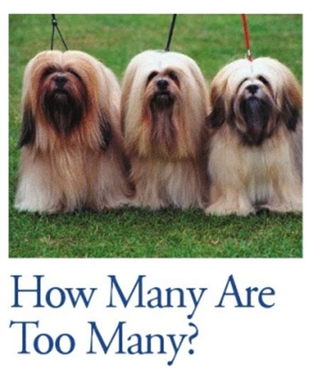 how many dogs is many how many are many tulsapets magazine