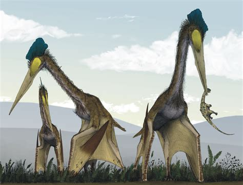 quetzalcoatlus wikipedia the free encyclopedia file life restoration of a group of giant azhdarchids
