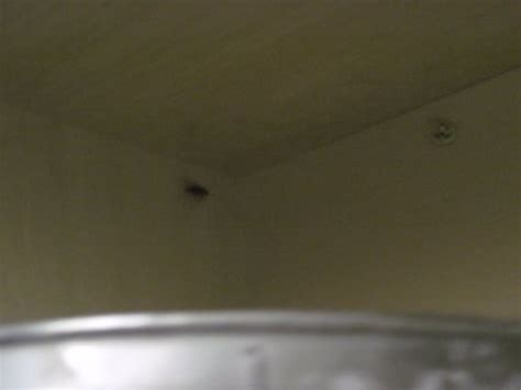 kitchen cabinet bugs bugs in the kitchen cabinets and these were just the