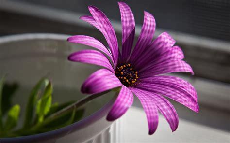 Best Flowers by Free Wallpaper Best Purple Flower
