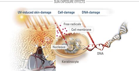Do Uv Ls Cause Cancer by Eucerin About Skin Sun And Skin Learn About How