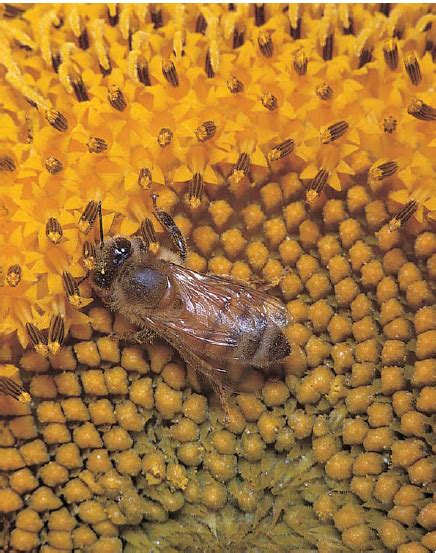 bees in the backyard keeping gentle bees quarto homes
