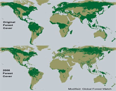 rainforest map save the rainforests getintothegreenscene