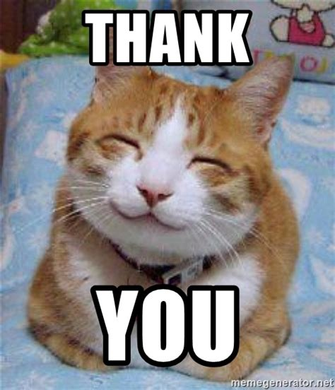 Thank You Cat Meme - image gallery happy kitty cat