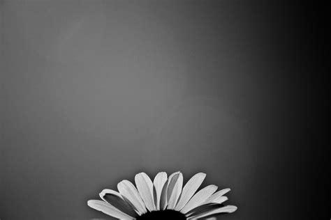wallpaper black n white black n white flower wallpaper by luckysam444 on deviantart