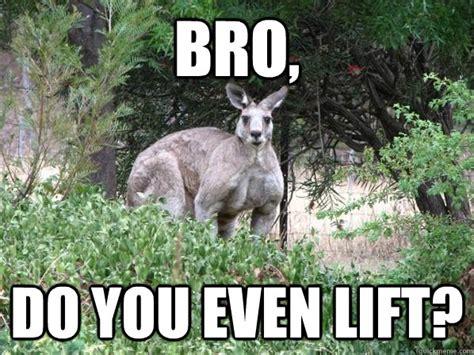 Kangaroo Meme - funny kangaroo meme bro do you even lift picture