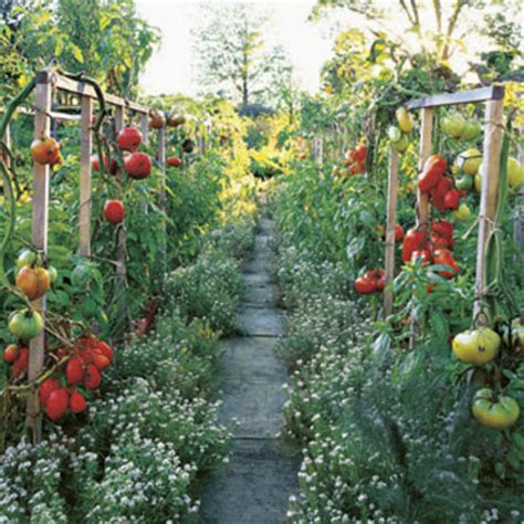 vegetables you can eat herbs fruits and vegetables plants that you can eat
