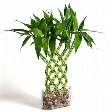 Maison à énergie Positive 364 by Trellis Lucky Bamboo Jardin Int 233 Rieur Bambou Et Jardins