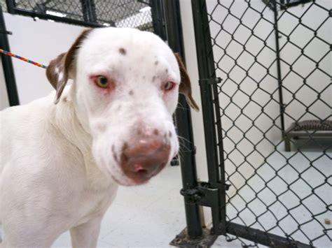 free puppies bradenton fl animal services giving away pets for free bradenton fl patch