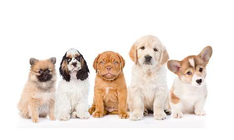 puppy preschool polite pooches sydney