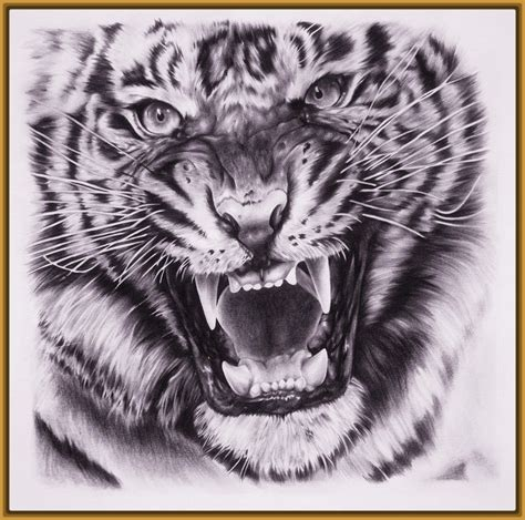 imagenes tumblr de tigres fotos de dibujos de tigres muy impresionantes fotos de