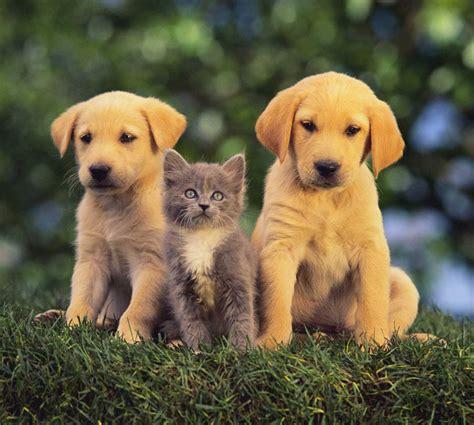 chat on soin et hygi 232 ne du chaton au quotidien conseils bien 234 tre