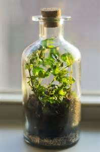 terrarium containers from recycled glass with with bottles and small stemmed plants planter
