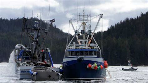 jobs on a fishing boat in alaska alaska fishing jobs current job vacancies excellent