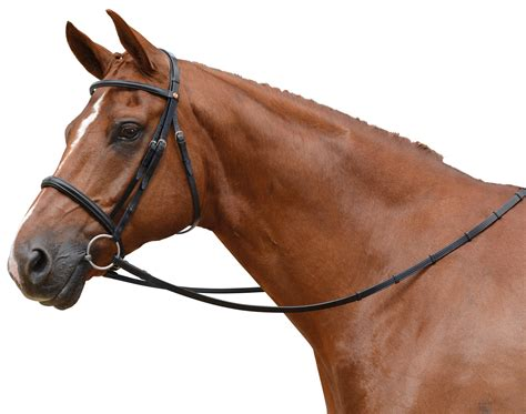 albion kb competition cavesson bridle