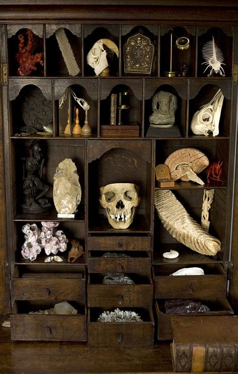 Cabinet Of Curiosities by A Cabinet Of Curiosities Photograph By Paul D Stewart