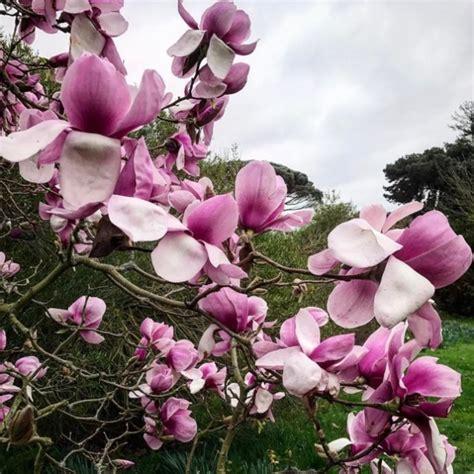 profumi fioriti profumi fioriti per la primavera amica