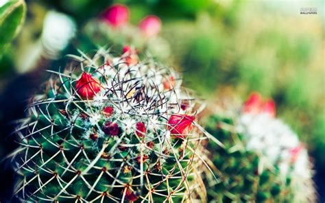cactus background cactus wallpapers hd pictures one hd wallpaper pictures
