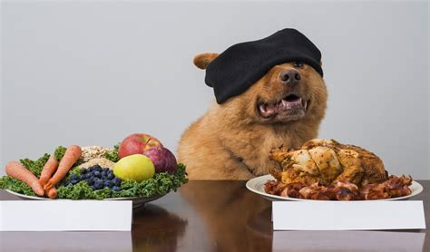can dogs be vegetarian can dogs go vegan science ins and outs of vegetarian diet for dogs