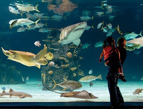 Aquascaping Materials Aquarium Supplies Cincinnati Hilliard Put Together Of
