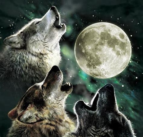 3 Wolf Moon Meme - 3 wolves and moon memes imgflip