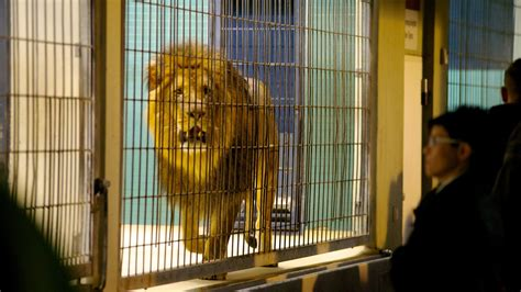 wäscherei zoologischer garten berlin berliner zoo in berlin expedia de