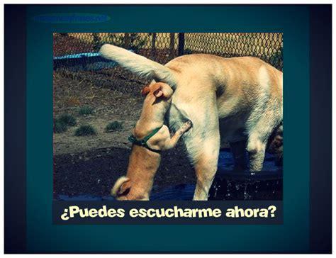 imagenes de amor chistosas con animales imagenes chistosas de dos perros imagenes para facebook