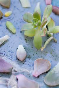 growth care and propagating succulents and other cacti