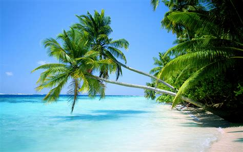 tropical beaches with palm trees wallpaper