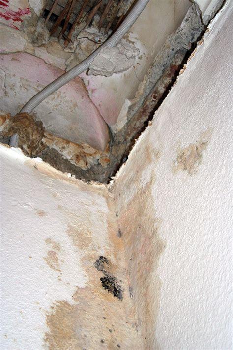 uringeruch aus teppich entfernen teppich hundeurin 03300120171009 blomap