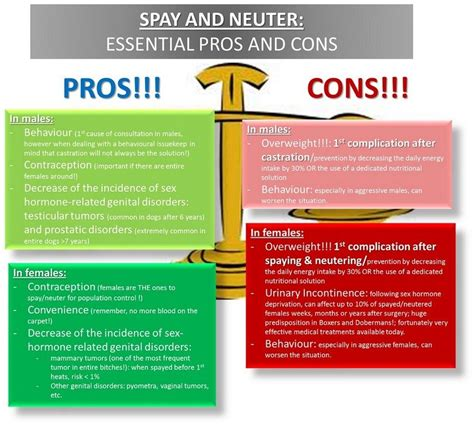 pros and cons of neutering a pros and cons of neutering cats dogs cats
