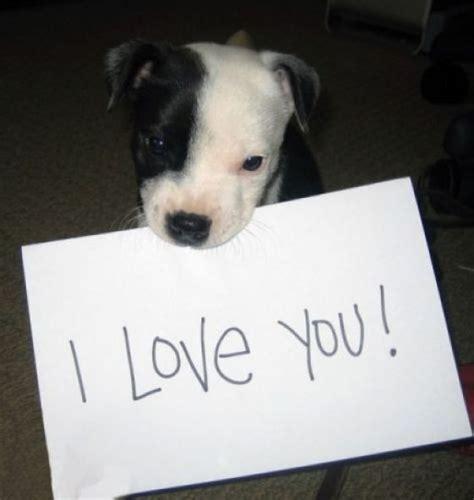 puppy i you i you quotes quotesgram