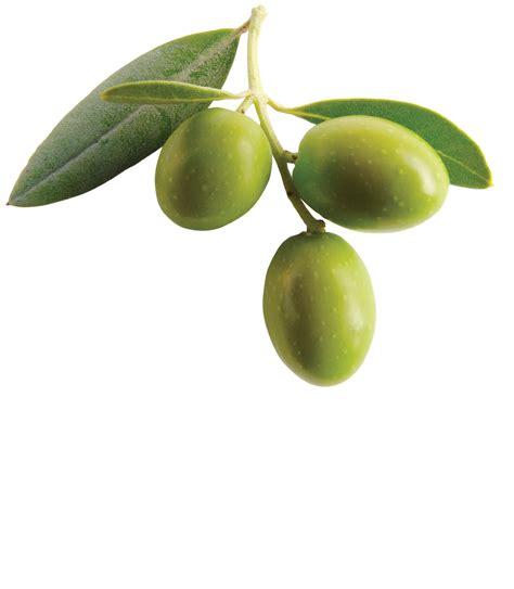 olive clipart olive png clipart png mart