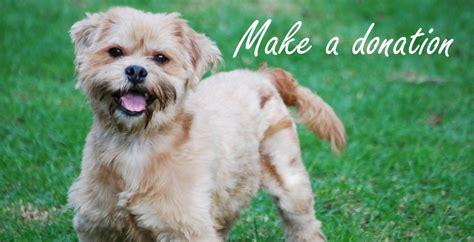 colorado shih tzu maltese rescue shih tzu adopt rescue breeds picture