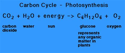 carbohydrates equation autotrophy and photosynthesis photosynthesis