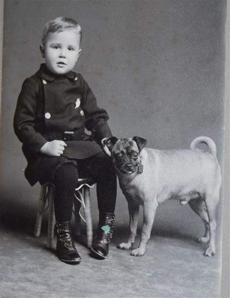 pug breeders in syracuse ny 455 best vintage photos 3 images on vintage photos and