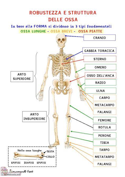 anatomia interna corpo umano oltre 25 fantastiche idee su scheletro umano su
